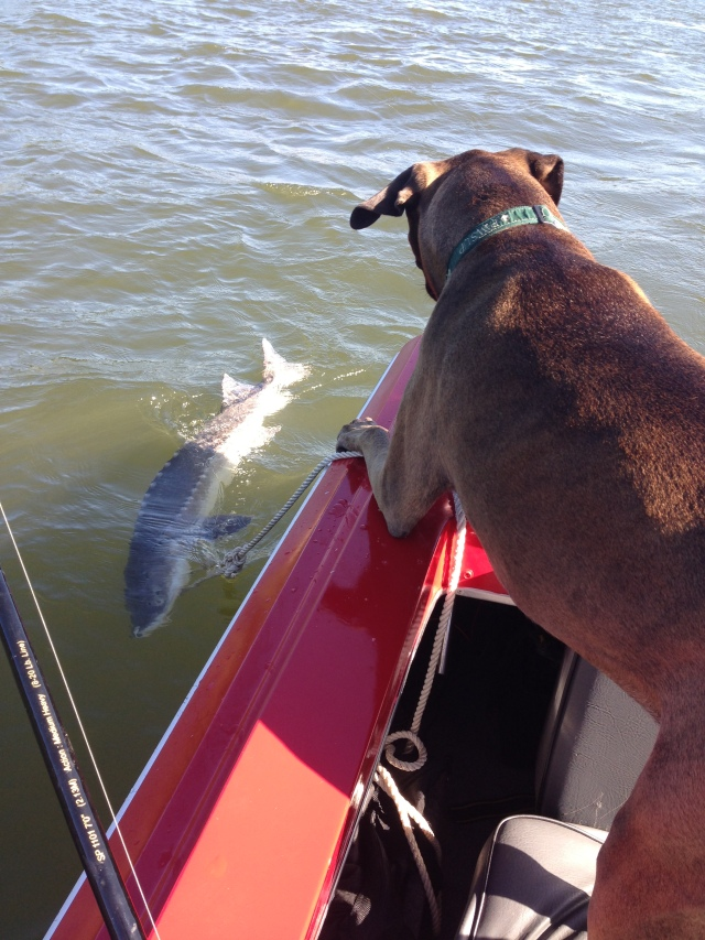 I'll guard the fish!